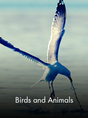 Sabah Al Ahmad Sea City - Birds and Animals