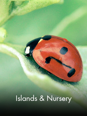 Sabah Al Ahmad Sea City - Islands & Nursery