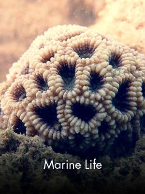 Sabah Al Ahmad Sea City - Marine Life